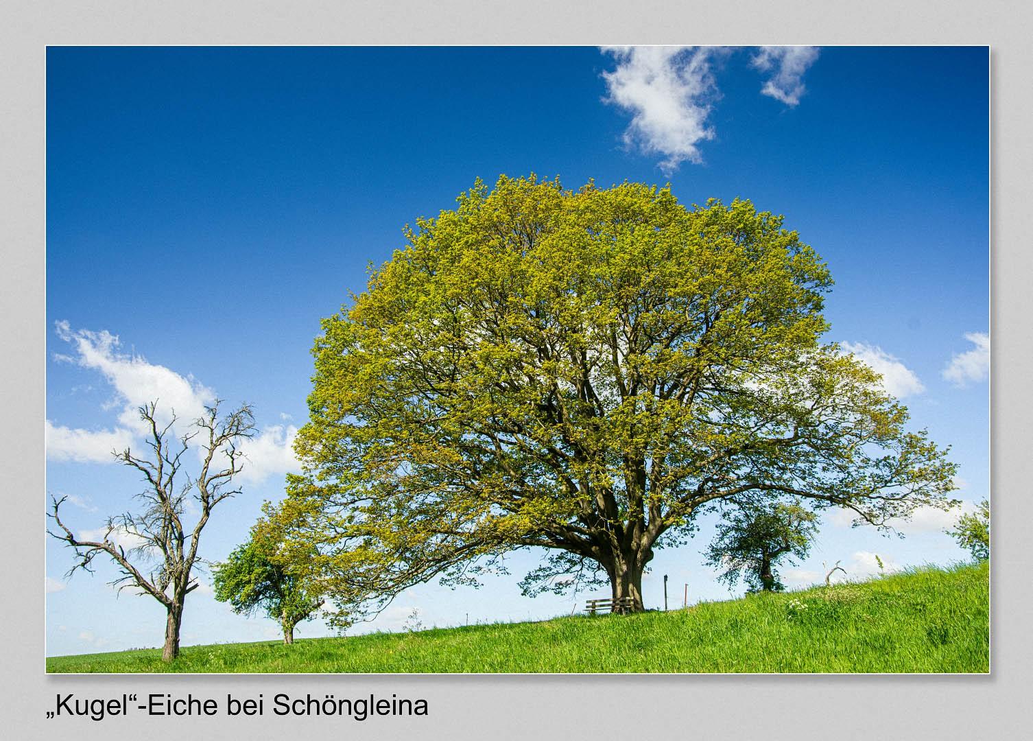 Guenther-Kuehnl-Schoengleina
